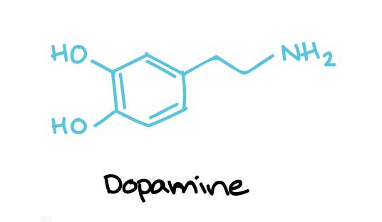 diagram of a dopamine molecule