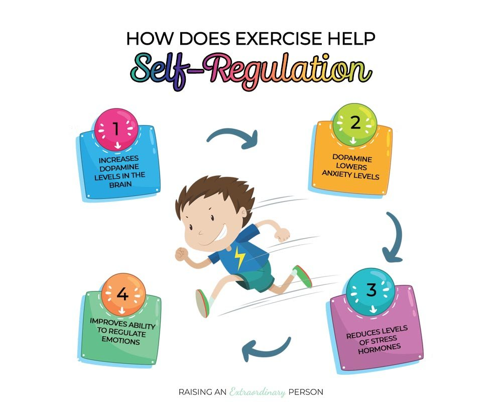 How does exercise improve self-regulation?
