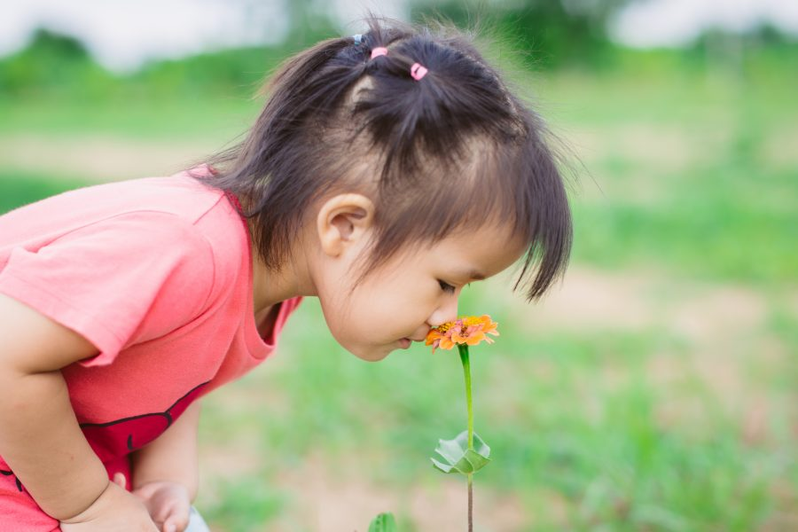 The Olfactory System: How Does it Work & How It's Impacted by SPD