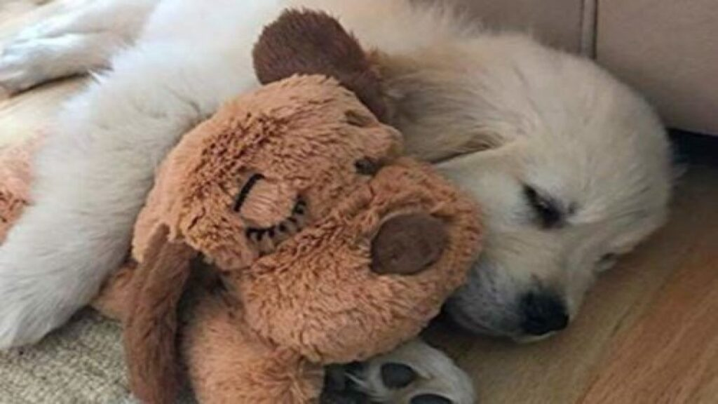This Dog Toy Is The Key To Your Child Sleeping Through The Night